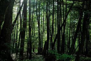 alberi in una foresta