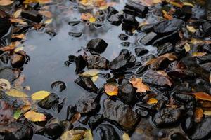 foglie cadute in un torrente