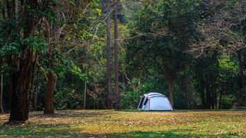 tenda nel parco