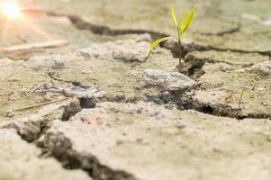 pianta nel terreno asciutto