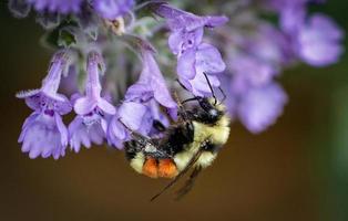 coprimi di polline foto