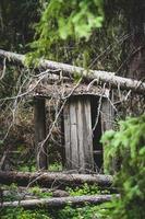 struttura in legno marrone nel bosco
