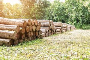 tronchi di legno di teak oro