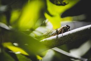 insetto su un ramo