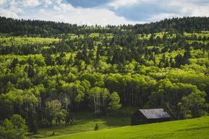 bella foresta con nuovi alberi