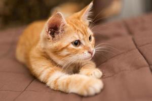 piccolo gattino sdraiato sul letto
