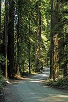 sequoie foto