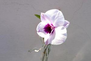 fiore bianco isolato dell'orchidea