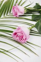 vista laterale di rose di colore rosa su una foglia di palma su sfondo bianco