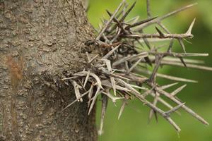primo piano di spine su un albero