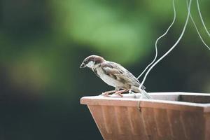 primo piano di un passero su un alimentatore
