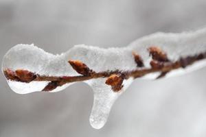 ghiaccioli su un ramo