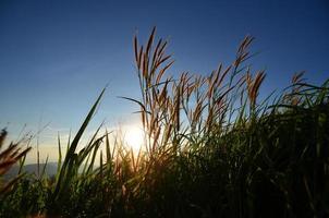 campi in erba sulla montagna foto