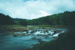 fiume attraverso una foresta