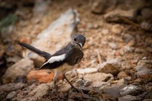 primo piano un uccello bianco e marrone sul terreno