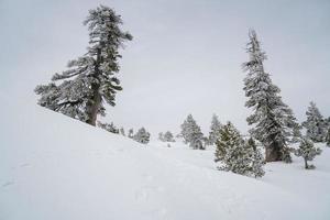 terra delle meraviglie invernali foto