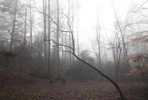 radura boschiva rurale in una mattina nebbiosa d'inverno