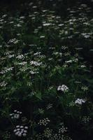 fiori bianchi e viola nella lente tilt shift