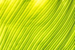 trama della foglia verde
