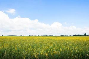 crotalaria chachoengsao farm