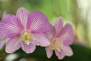 primo piano del fiore dell'orchidea