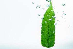 foglia verde e bolle nell'acqua
