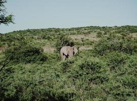 elefante in piedi vicino agli alberi