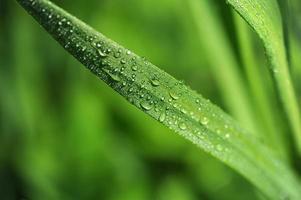 macro di erba