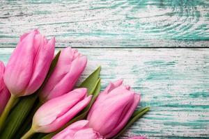 tulipano.