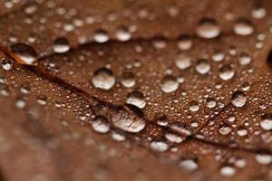 foglie cadute ricoperte di gocce di pioggia