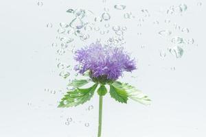 primo piano di un fiore viola in acqua