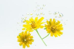 primo piano di un fiore giallo in acqua