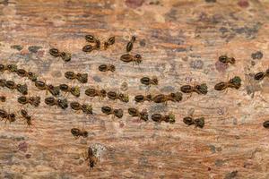 formiche su un albero