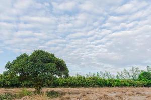 albero sul campo