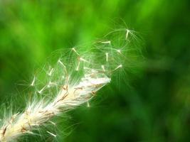 Wildflower essiccato nella foresta verde