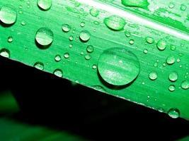 gocce d'acqua sulla foglia