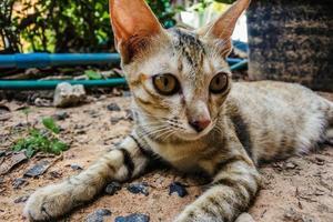 giovane gatto randagio