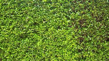 struttura della parete di erba verde foto