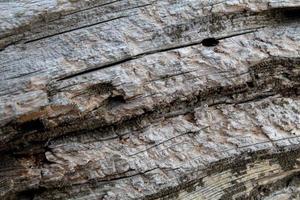 primo piano di un tronco d'albero