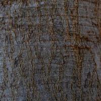 primo piano di un tronco d'albero foto