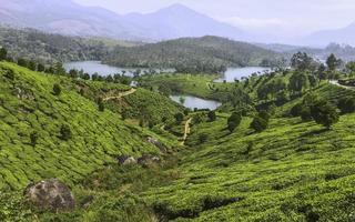 piantagione di tè nelle colline di kannan devan, munnar, kerala, india. foto