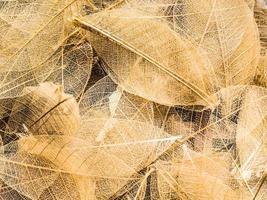 vista dall'alto di bellissime foglie decorative trasparenti