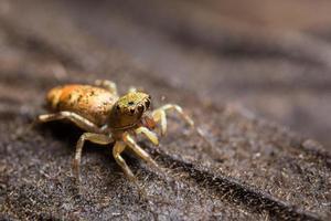 ragno macro su sfondo marrone