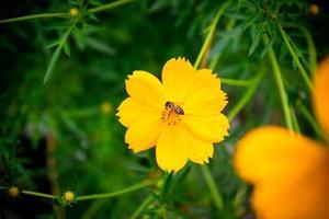 un'ape visita un fiore dell'universo