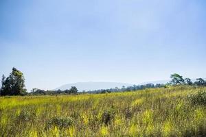 paesaggio nel parco nazionale khao yai foto