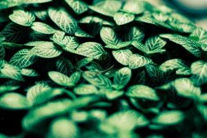 foglie verdi pattern di sfondo