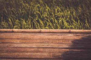 assi di legno su un campo di riso