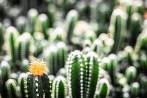messa a fuoco selettiva di cactus in un ambiente di vita naturale