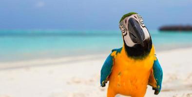 primo piano di un pappagallo su una spiaggia bianca