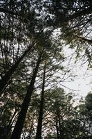 alberi verdi in una foresta